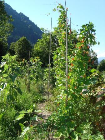 rebola permakulturgarten gemsegartenrebola klein