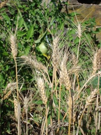 rebola permakulturgarten hintergrundinterviewvielleicht klein