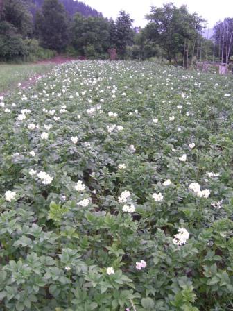 rebola permakulturgarten kartoffelacker klein